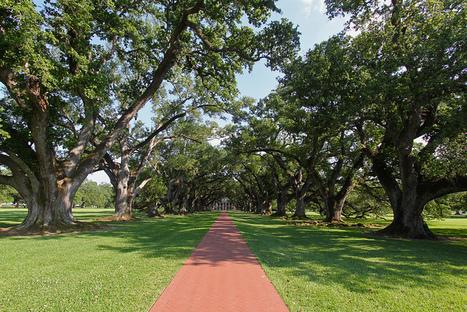 Grand entrance, Oak Alley Plantation | Oak Alley Plantation: Things to see! | Scoop.it