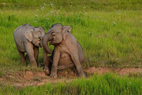 This is Why you Shouldn't Ride an Elephant.   Animal Empathy & Natural Pet Care   Scoop.it