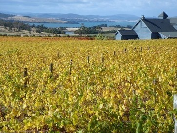Tasmania seeks to tempt Champagne investors | Vitabella Wine Daily Gossip | Scoop.it