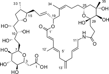 Belizentrin, a Highly Bioactive Macrocycle from the Dinoflagellate Prorocentrum belizeanum | Marine Natural Products | Scoop.it
