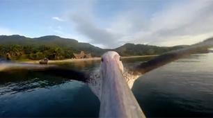 GoPro captures orphan pelican's first flight in Tanzania - KTAR.com | Content | Scoop.it