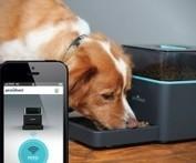 Pintofeed Automatic Pet Feeder | EXTRANGE | Scoop.it