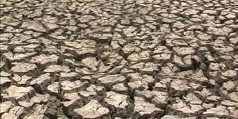 En Inde, l'ouest du Maharashtra frappé par une forte sécheresse | Nature to Share | Scoop.it