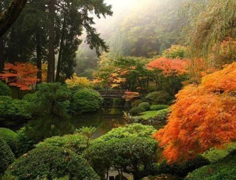 Storae Sai Eid's Photos   Facebook   Japanese Gardens   Scoop.it