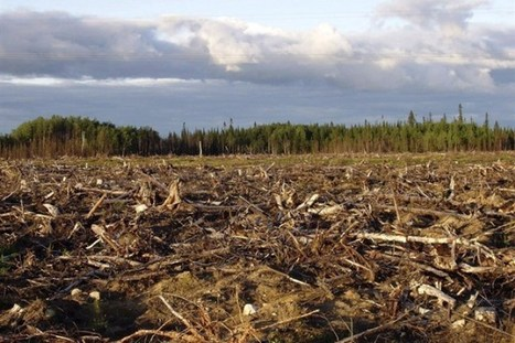 More boreal forest protected in 2013, but challenges remain: scientist | Geography for All! | Scoop.it