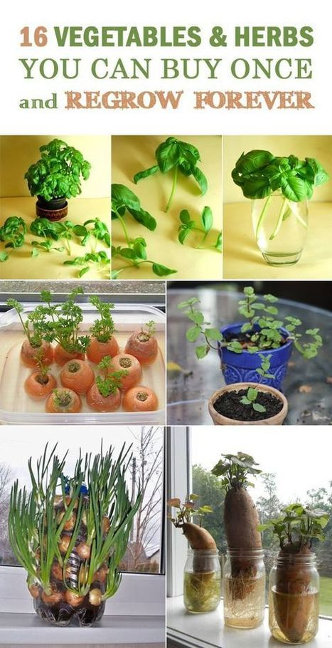 Food Ways - Vegetables and herbs to grow in your garden ... | My I Like Eating Channel | Scoop.it