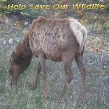 Saving Our Wildlife - shoputopianparty | Out Goes The Garbage | Scoop.it