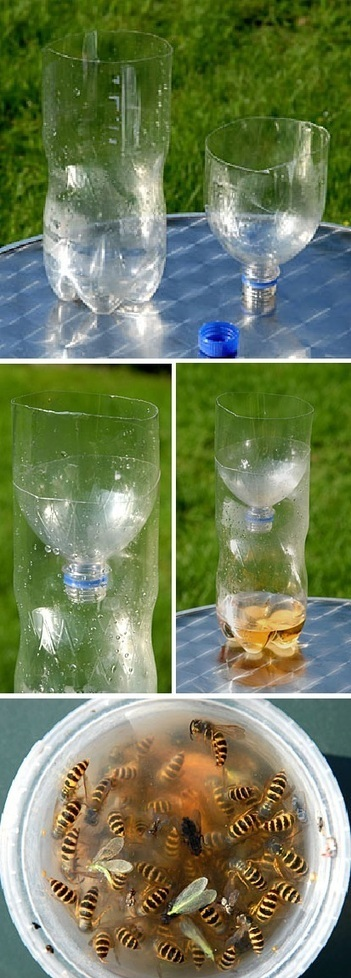 Make your own safe wasp trap | Backyard Gardening | Scoop.it