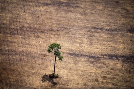 Big firms are still not acting on their deforestation promises | Erba Volant - Applied Plant Science | Scoop.it