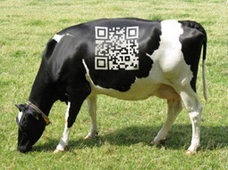 Is it Time For You to Add A QR Code? | New Media PA | Scoop.it