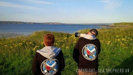 @SeaShepherd UK :: #Scottish #Seal Defence Campaign Update: 14th August 2014   Rescue our Ocean's & it's species from Man's Pollution!   Scoop.it