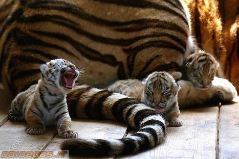 Top 22 of Mother and Cubs - Cutest Wild Animals | Animals | Scoop.it