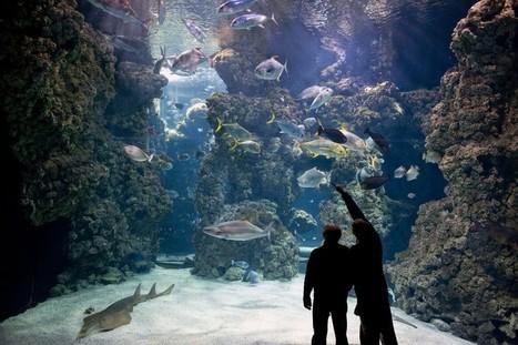 Stella, une femelle requin nage en Principauté de Monaco | Zoos Fermes Parcs | Scoop.it