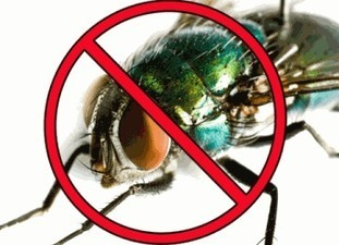 How to Get Rid of Flies Indoors and Outdoors | Get Rid Of Flies Guide | Scoop.it