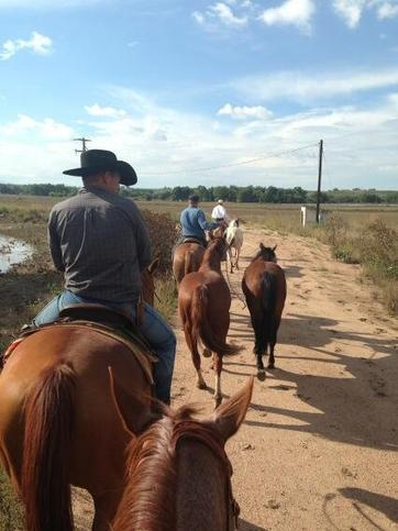 Twitter / KodyLostroh: Found a bunch of stranded horses ...   horses   Scoop.it