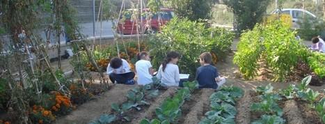 El huerto escolar: revolución en la escuela | Recull diari | Scoop.it
