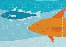 New online fisheries science research library - World Fishing | Aquaculture Research | Scoop.it