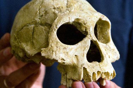 Hoe één schedel de vroege menselijke stamboom kan samenbrengen | KAP_VerdaetS | Scoop.it