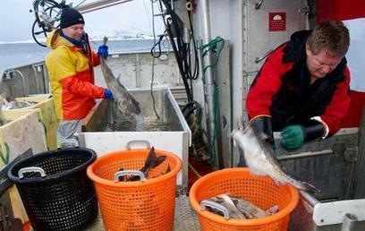 WORLDWIDE: Comeback cod lessens gloom over emptying oceans | World Geography: Fishing | Scoop.it