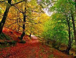 Hayedos asturianos, los más desconocidos - Actualidad Medio Ambiente   Actualidad forestal cerca de ti   Scoop.it