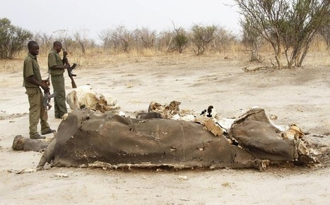 Poachers kill 300 Zimbabwe elephants with cyanide | historian: science and earth | Scoop.it