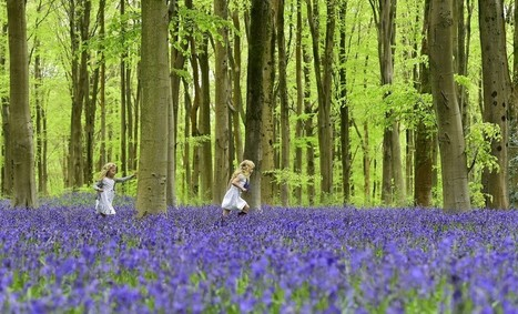 How Nature Makes Kids Smarter | eVirtual Learning | Scoop.it