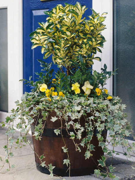 The Cold, Hard Facts on Protecting Potted Plants : HGTV Gardens | Landscape Creative Inspiration | Scoop.it