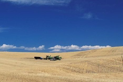 Genetically Modified Wheat Isn't Supposed to Exist. So What Is It Doing in Oregon? | Corruption in Business | Scoop.it