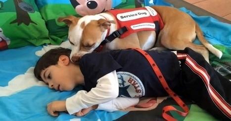 Le pitbull et son maître handicapé... Quelle compassion ! | Aidants familiaux | Scoop.it
