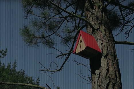 VIDÉO - Le nichoir à oiseaux qui prévient des incendies de forêt | Biodiversité | Scoop.it