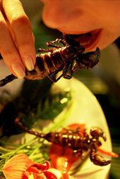"""HowStuffWorks """"Benefits of Eating Bugs""""   Entomophagy: Edible Insects and the Future of Food   Scoop.it"""