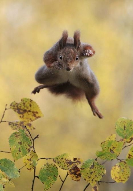 A cheeky hamster and a dancing lemur - it's the Comedy Wildlife Awards | Quite Interesting News | Scoop.it