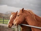 Bunny's Blog: Horses at Risk of West Nile Virus | Pet News | Scoop.it