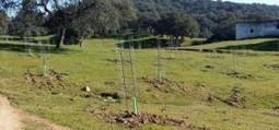 Advierten de que sólo el 49% de la superficie de dehesa andaluza se regenera | DEHESAS IBERICAS | Scoop.it