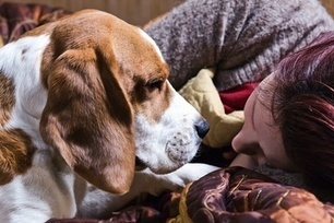 Canine Comfort: Do Dogs Know When You're Sad?   Gentle Dog Training and Care   Scoop.it