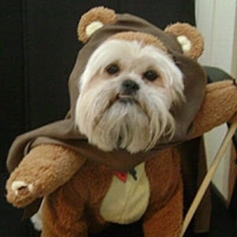 Animals in Star Wars Costumes: Photo List of Star Wars Dogs and Cats | The Blog's Revue by OlivierSC | Scoop.it