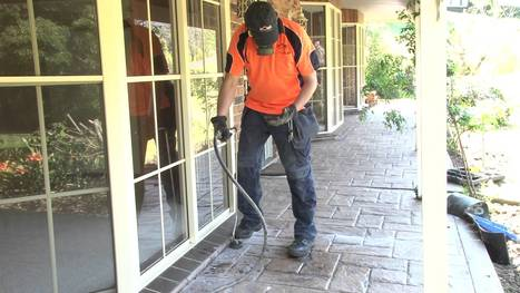 Leading pest control company in Sydney offers customized termite treatment - News - Bubblews | Home Termite Control | Scoop.it