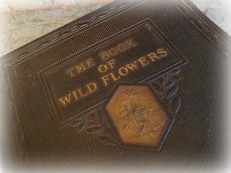 antique book of wild flowers / 1924 victorian ephemera | Daily Paper | Scoop.it