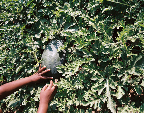 CoLab Radio » Blog Archive » Greater Yield Part One: Enhancing Education | Urban Gardening | Scoop.it