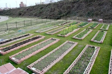 Edwin Marty and Urban Farming in Montgomery, Alabama — City Farmer News | City farming | Scoop.it