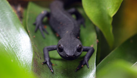Amazing facts about newts | OneKind | Chimera | Scoop.it