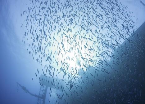 Islamorada Charter Fishing: Drift Fishing Tips on Florida Keys Wrecks   Islamorada Fishing Source   Scoop.it