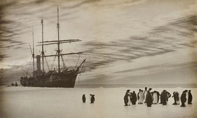 Douglas Mawson's tragic Antarctic trek | Antarctica | Scoop.it