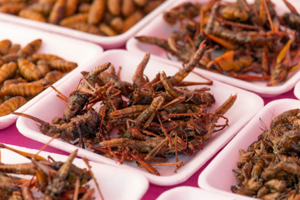 Bay Area 'Entopreneurs' Feed Growing Appetite For Edible Insects | Entomophagy: Edible Insects and the Future of Food | Scoop.it
