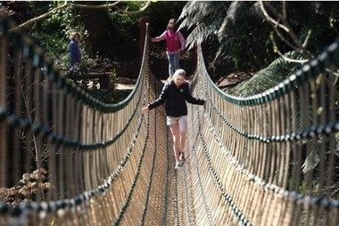 I'm a Celebrity-style 100ft jungle rope bridge unveiled - in Cornwall - Western Morning News | St Ives in Cornwall | Scoop.it