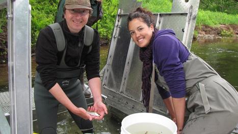 Fish species making a comeback in Petitcodiac River - New Brunswick - CBC News | AboriginalLinks LiensAutochtones | Scoop.it