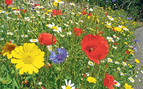 Rothamsted mention: Gardeners in the grip of Meadowmania | BIOSCIENCE NEWS | Scoop.it
