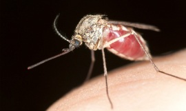 New malaria test kit gives a boost to elimination efforts worldwide   ICT for Education and Development   Scoop.it