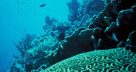 "Ocean Acidification Hurts The Basis Of Marine Life - Clapway (""slow dying of ocean food & marine life"") 