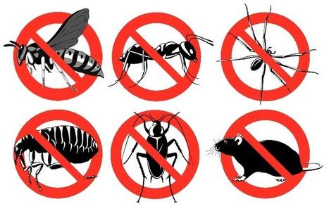 شركة رش مبيدات بالرياض مع ضمان سنه - جوال 0559200924 | شركة رش مبيدات بالرياض | Scoop.it